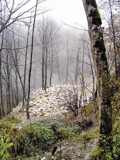 جنگل - زباله