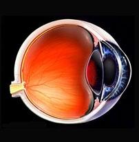 یک منبع از سلولهای بنیادی در شبکیه چشم وجود دارد