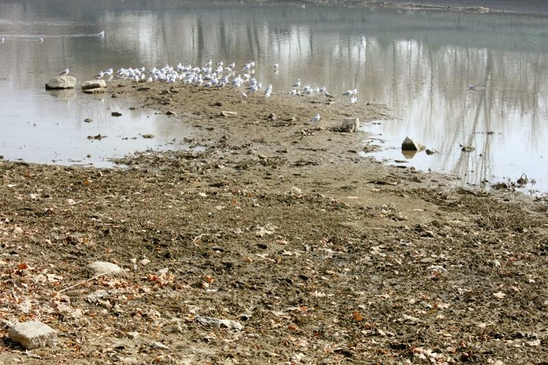 پرندگان مهاجر - زاینده رود