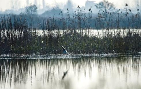 آشنایی با پارک ملی بوجاق - گیلان