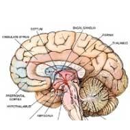 ضعف حافظه از چهلو پنج سالگی شروع میشود