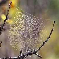 تار عنکبوت در خدمت الکترونیک و پزشکی
