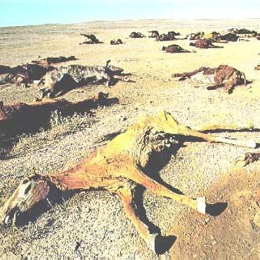 گرما، عامل بزرگترین انقراض زمین