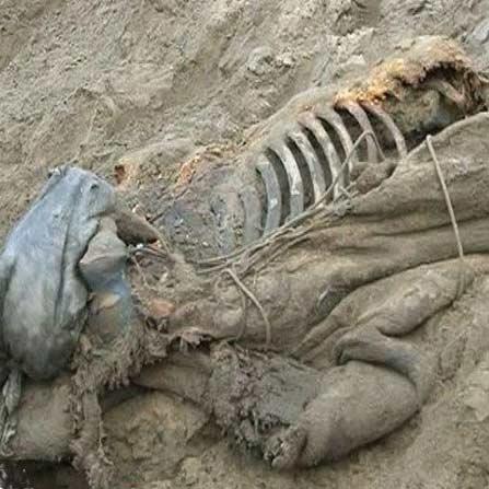 جسد سالم یک ماموت 30 هزار ساله در روسیه