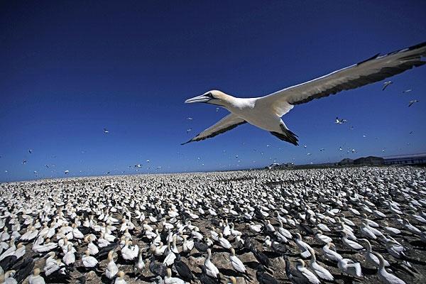 عکسهایی که پرندگان از خود گرفتهاند