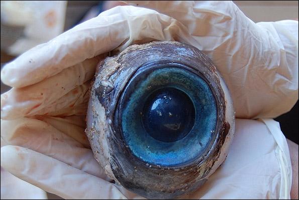 چشم مرموز و غول آسا