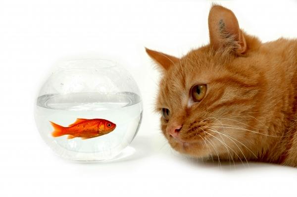 چطور از ماهی قرمز نگهداری کنیم؟