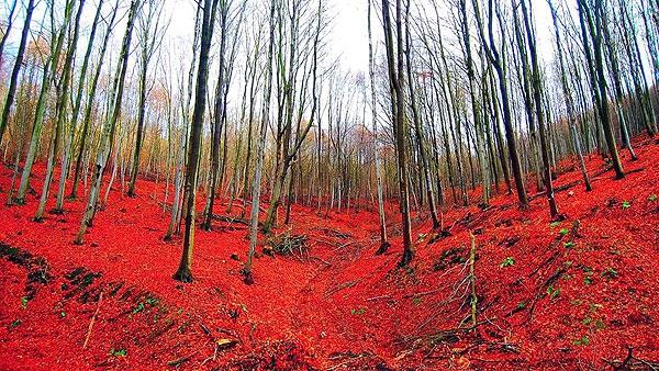 رنگهای پاییز در سرتاسر جهان