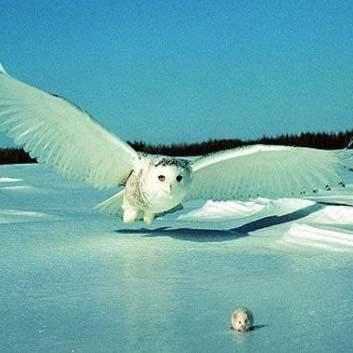 بالهای جغد، الهام بخش پرواز بی صدا