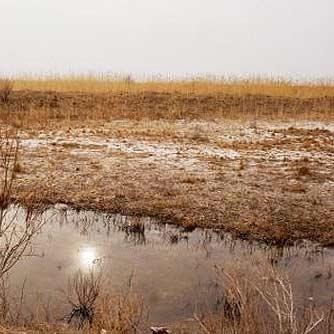 ساختن سد بر رودخانههای بالادست عامل اصلی خشک شدن تالابها