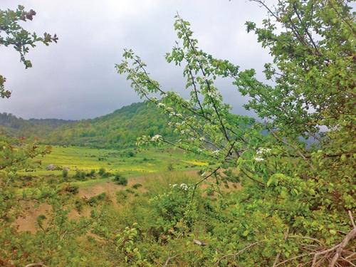 جنگل سوادکوه