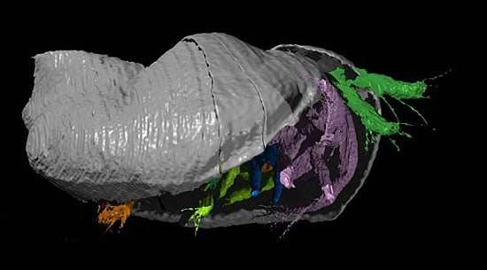 فسیل یک موجود دریایی 425 میلیون ساله