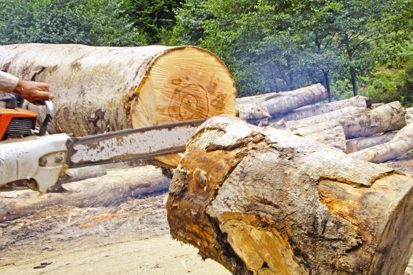 جنگل - قطع درختان