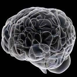 بافت سه بعدی مغز در آزمایشگاه تولید شد