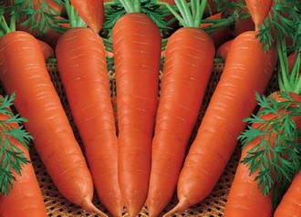 مصرف هویج و پیشگیری از شکستگی استخوان در مردان