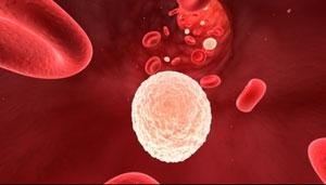 مفاهیم: آنتی ژن سازگاری بافتی (HLA) چیست؟