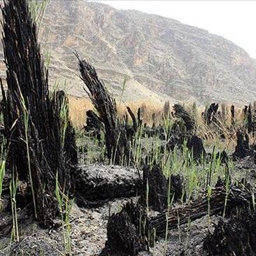 آتش سوزی در دریاچه پریشان