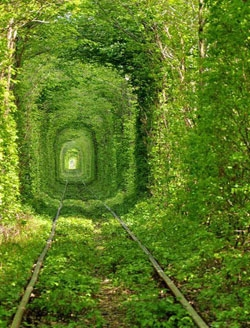 مسیر سبز