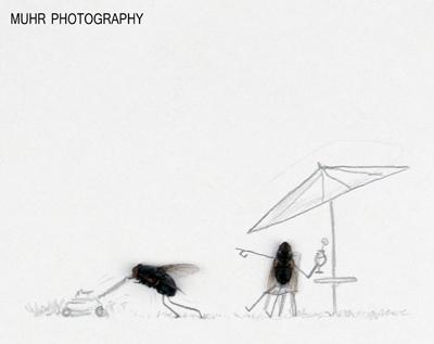 حشرهای مرده سورژه عکاسی