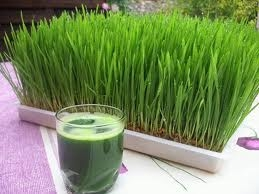 آب سبزه گندم
