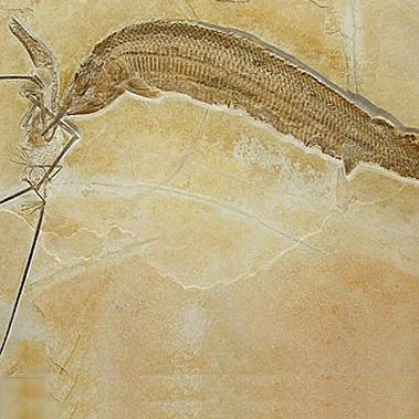 فسیل نبرد یک ماهی و خزنده ای بالدار