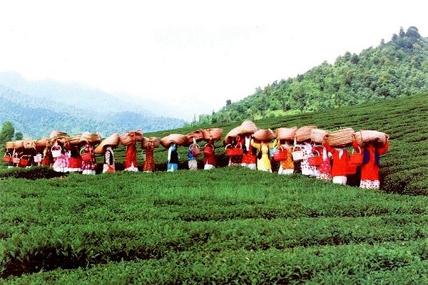 آشنایی با جاذبههای گردشگری لاهیجان - گیلان