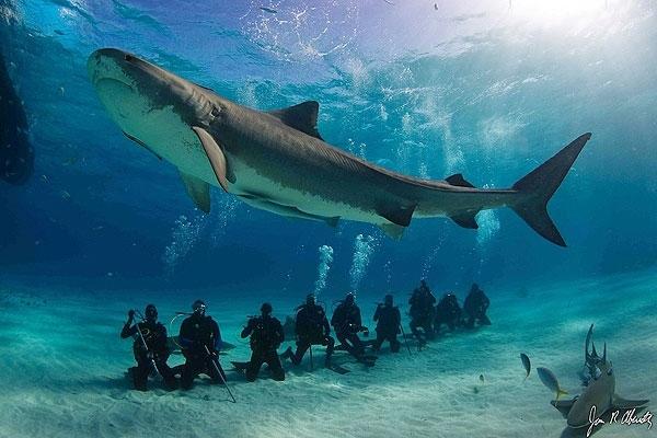 shark600