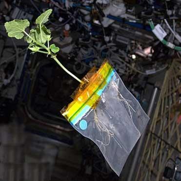 گیاه کدو سبز در فضا