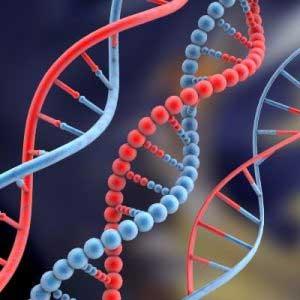 DNA مصنوعی هم ساخته شد