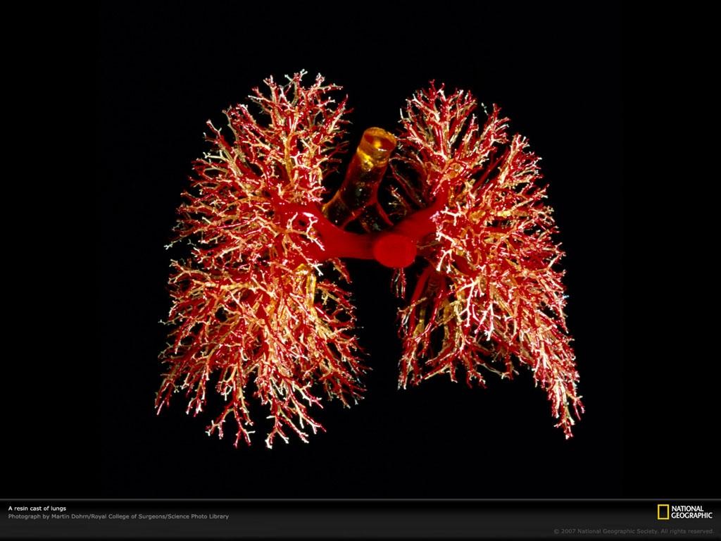 دانلود کنید: ریه شما این شکلی است
