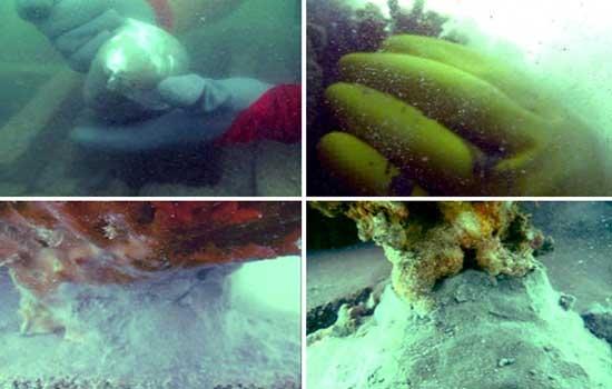انتقال مرجانهای چابهار با موفقیت انجام شد