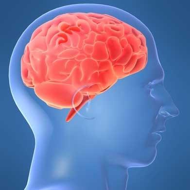 سلول های عصبی محافظ، هنگام صرع و سکته مغزی