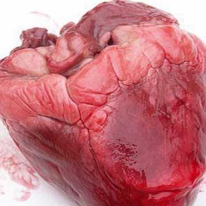 قلب انسان