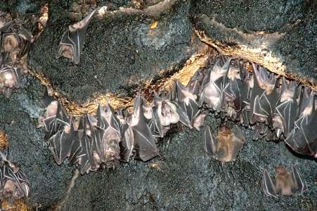 آشنایی با غار خفاش - ایلام
