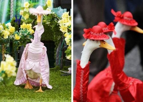 شوی لباس اردکها سال 2012