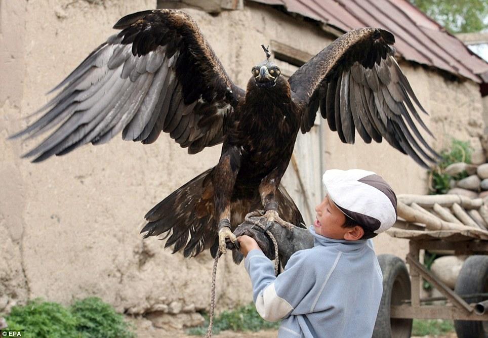 تصاویر شگفت انگیز آموزش قدرتمندترین شکارچی طبیعت توسط دو نوجوان