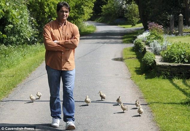 تصاویر مردی که مادر هشت جوجه اردک شد!