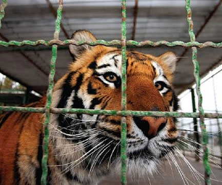 mashhad zoo