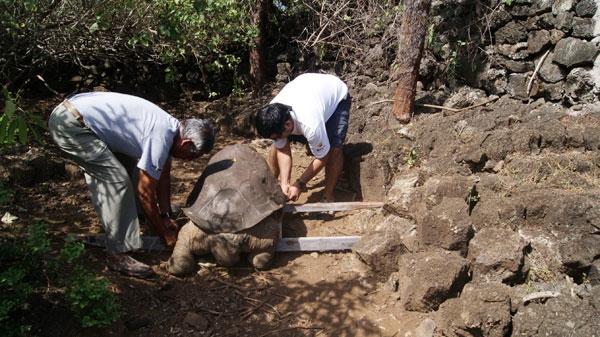 مرگ لاکپشت غولآسا پس از یک قرن