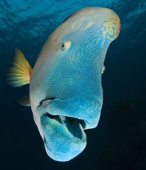 مجموعه تصاویر آبی از حیات وحش دریایی قطب جنوب