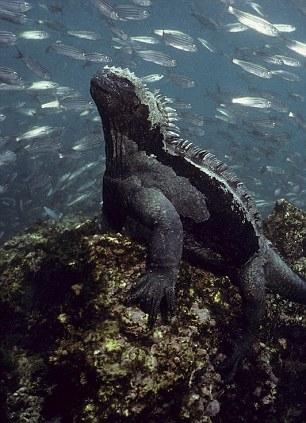 عکاسی از «شیطان تاریکی» در زیر آب؛ این تصاویر را از دست ندهید