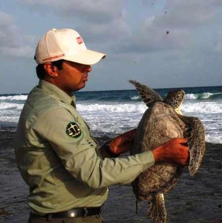 لاک پشتهای سبز دریایی در چابهار، پایش میشوند