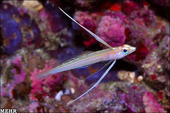 25گونه ماهی جدید در آسیا