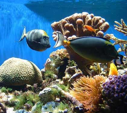 بازسازی زیستگاه آبسنگهای مرجانی خلیج فارس و دریای عمان