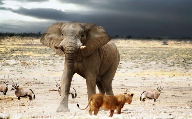 اعتراض به آغاز ماموریت کشتی نوح در نامیبیا، 148 حیوان آفریقایی به کوبا میروند