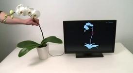 گیاه و تکنولوژی