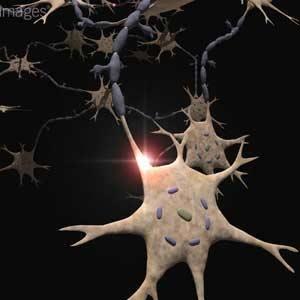 افسردگی و استرس مغز را کوچک می کند