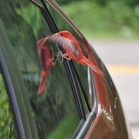 پرندهها هم شیشه را ببینند