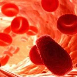 گلبولهای قرمز خون به سلول بنیادی تبدیل میشوند