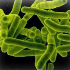 کشف یک گونه جدید باکتری بیماریزا و ثبت جهانی آن به نام ایران